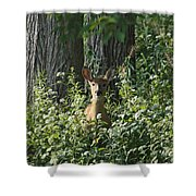 Portrait Of A Whitetail Fawn II Shower Curtain