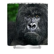 Portrait Of A Wild Mountain Gorilla Silverbackhighly Endangered Shower Curtain