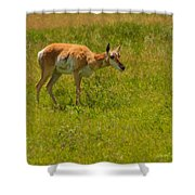 Portrait Of A Young Pronghorn Shower Curtain
