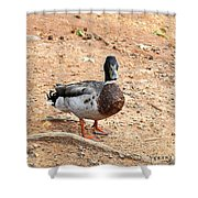 Portrait Of An Alabama Duck 2 Shower Curtain