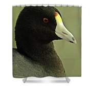 Portrait Of An American Coot Shower Curtain