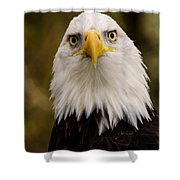 Portrait Of An Eagle Shower Curtain