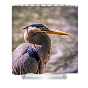 Portrait Of Ardea Herodias Shower Curtain
