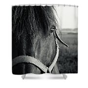 Portrait Of Horse In Black And White Shower Curtain