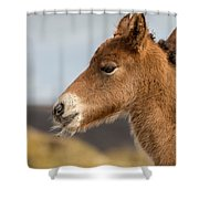 Portrait Of Newborn Foal Shower Curtain
