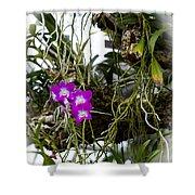 Portrait Of Orchids Shower Curtain