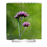 Portrait Of Purple Verbena Shower Curtain