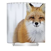 Portrait Of Red Foxchurchill Manitoba Shower Curtain