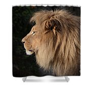 Portrait Of The King Of The Jungle  Shower Curtain
