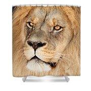 Portrait Of The Lion Shower Curtain