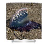 Portuguese Man-o War Beached Shower Curtain