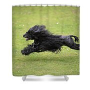 Portuguese Water Dog Shower Curtain