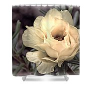 Portulaca Flower Shower Curtain