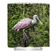 Posed Shower Curtain