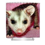 Poser Possum Shower Curtain