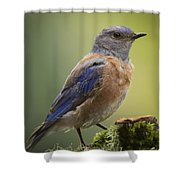 Posing Bluebird Shower Curtain