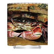 Posing Crab Shower Curtain