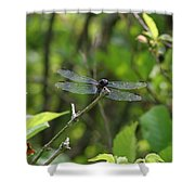 Posing Dragonfly Shower Curtain