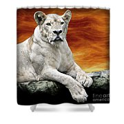 Posing Lioness Shower Curtain