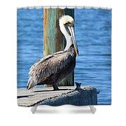 Posing Pelican Shower Curtain