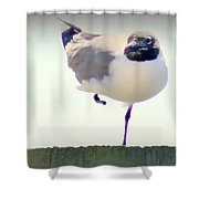 Posing Seagull Shower Curtain