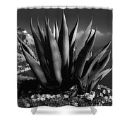 Positano Agave Bw Shower Curtain