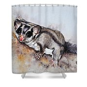 Possum Cute Sugar Glider Shower Curtain