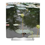 Post Bloom Shower Curtain