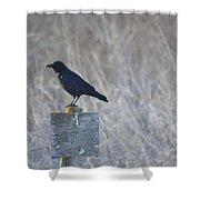 Posted Crow Shower Curtain