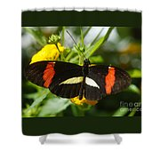 Postman Butterfly 2 Shower Curtain