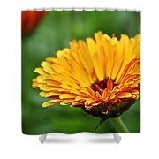 Pot Of Gold Marigold Shower Curtain