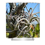 Potbelly Airplant Shower Curtain