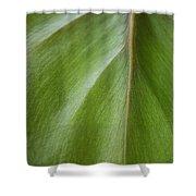 Pothos Detail Shower Curtain