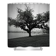 Potomac Tree Shower Curtain