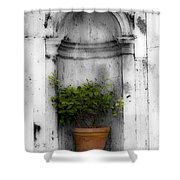 Potted Plant At Villa D'este Near Rome Italy Shower Curtain