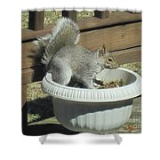 Potted Squirrel Shower Curtain