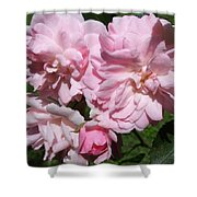 Powder Puff Pink Shower Curtain