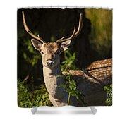 Powderham Deer  Shower Curtain