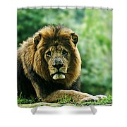 Power Starng Shower Curtain