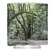 pr 136 - Bowed Tree Shower Curtain