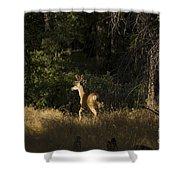 pr 140 -Deer in the Grass Shower Curtain