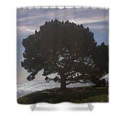 pr 216- Black Oak Shower Curtain