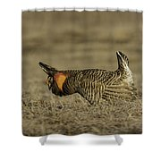 Prairie Chicken-9 Shower Curtain by Thomas Young