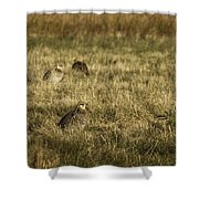 Prairie Chickens After The Boom Shower Curtain by Thomas Young