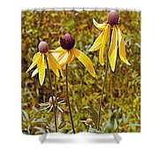 Prairie Coneflowers In Pipestone National Monument-minnesota  Shower Curtain