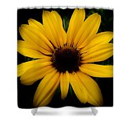Prairie Coreopsis Shower Curtain