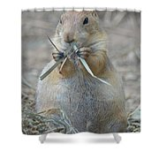 Prairie Dog Food Shower Curtain