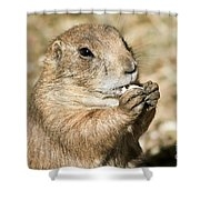 Prairie Dog Shower Curtain