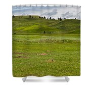 Prairie Dog Town Shower Curtain