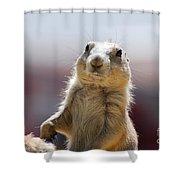 Prairie Dog With Buck Teeth Shower Curtain